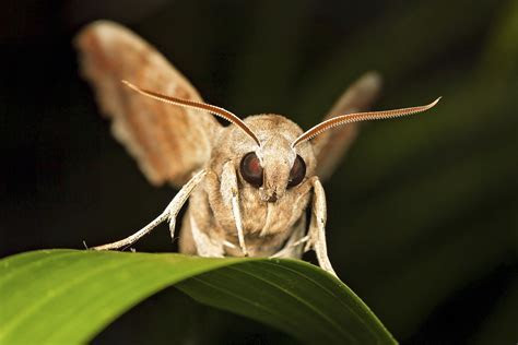 List of Nocturnal Flying Insects   Sciencing