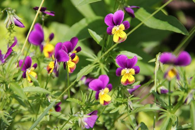 blog wanderlust whimsy megan garden flowers