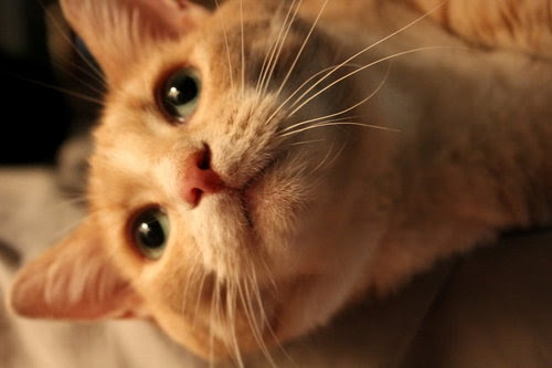 Whiskers_by_madiuhart-d5d588u_large