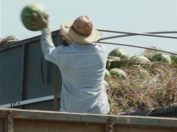 Cerca de 30 mil toneladas são esperadas na colheita (Foto: Reprodução/TV Tem)