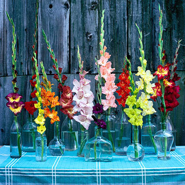 gladiolas in a row