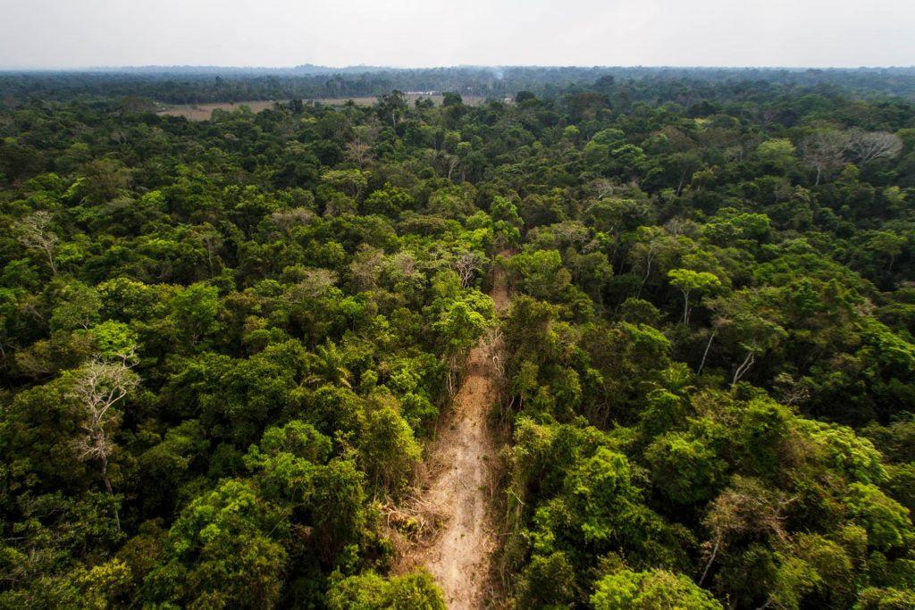 Ramal madeireiro corta a floresta ainda de pé. Foto: Marcio Isensee e Sá.