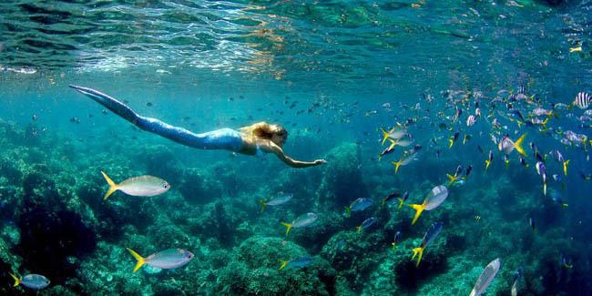 Unduh 98+ Gambar Ikan Duyung Asli HD Terbaik
