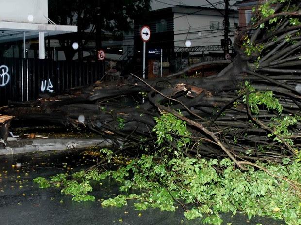 árvore cai chuva sp (Foto: Carlos Pessuto/Futura Press/Estadão Conteúdo)
