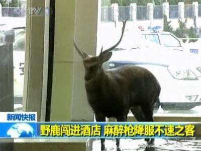 A hotel in China's Dalian city has an unexpected guest -...