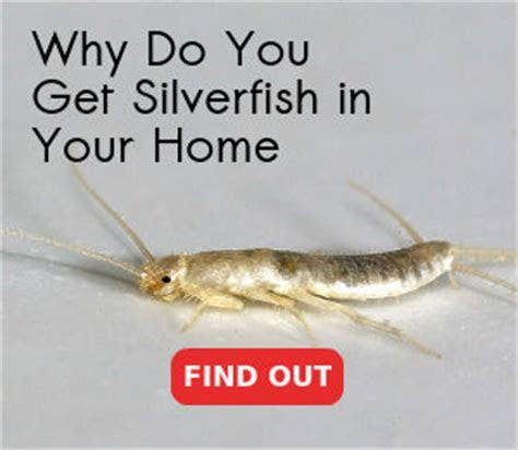 Silverfish Control London   Full Guaranteed Service   Panther Pest Control