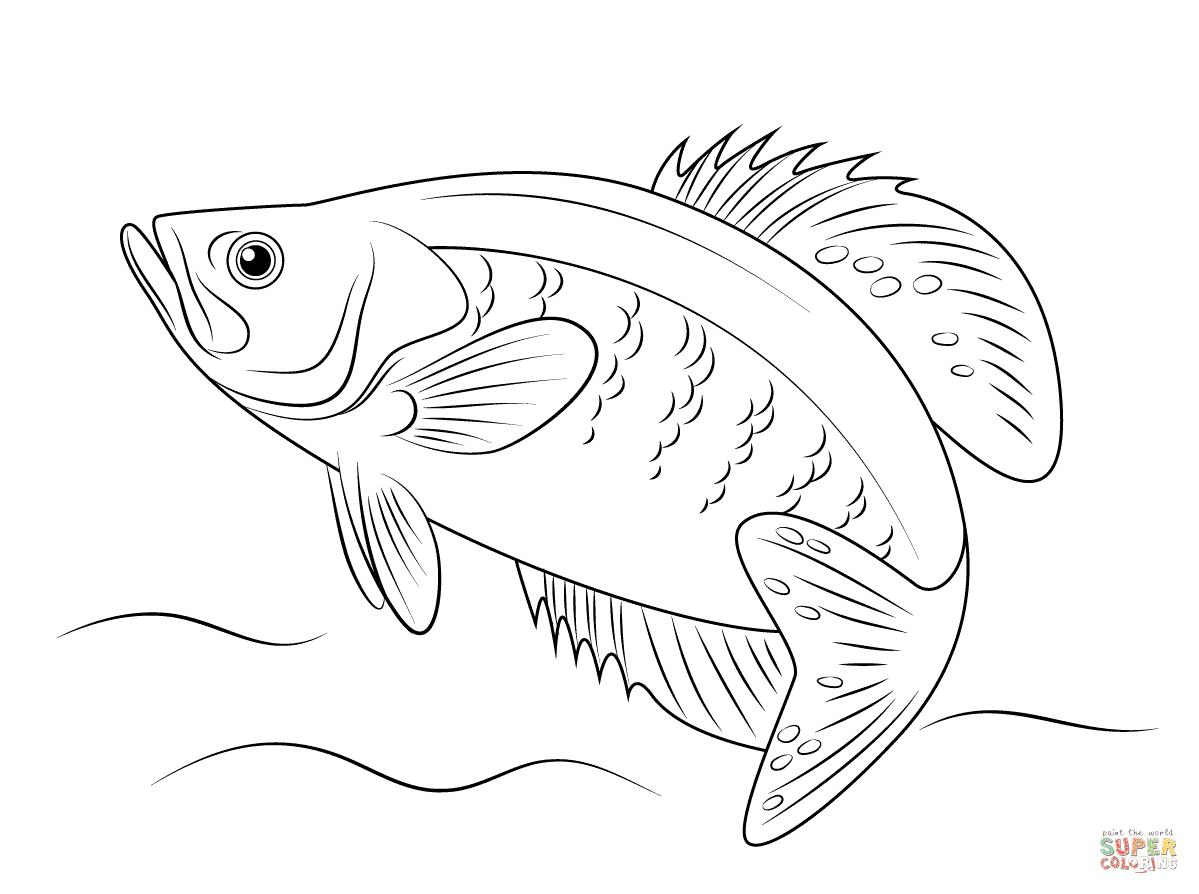 Flussbarsch
