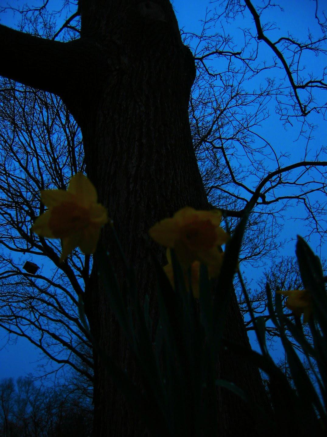 soul-amp flower pics