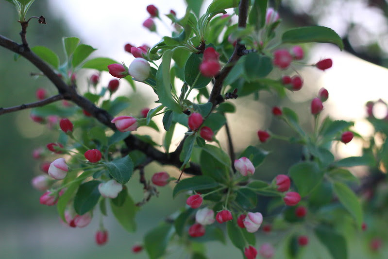 blossoms by replicate then deviate