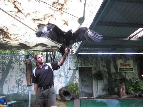 Wildlife Currumbin Sanctuary, Gold Coast Australia