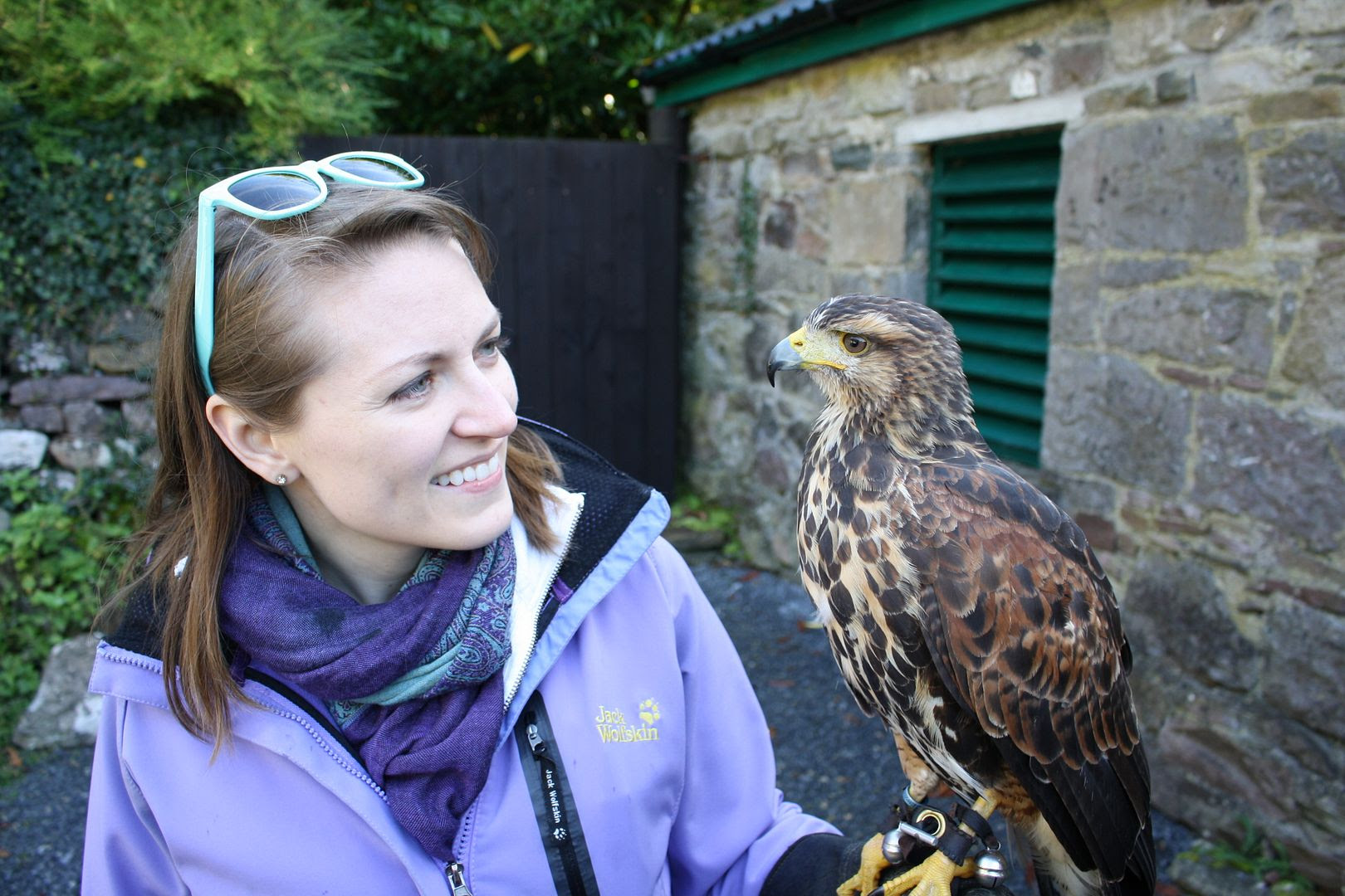 Ireland's School of Falconry Hawk Walk photo IMG_2650_zps8o3ddxkr.jpg