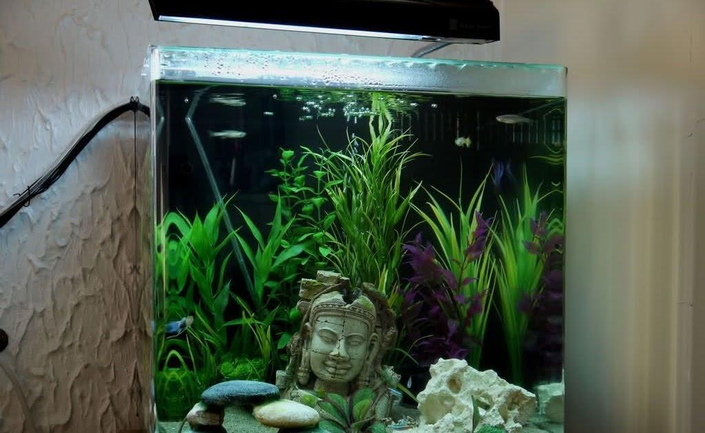 kuchen backofen: 60l Aquarium Fische