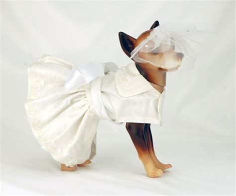 The Well Dressed Dog At A Wedding: 10 Awesome Dog Bridal Gowns