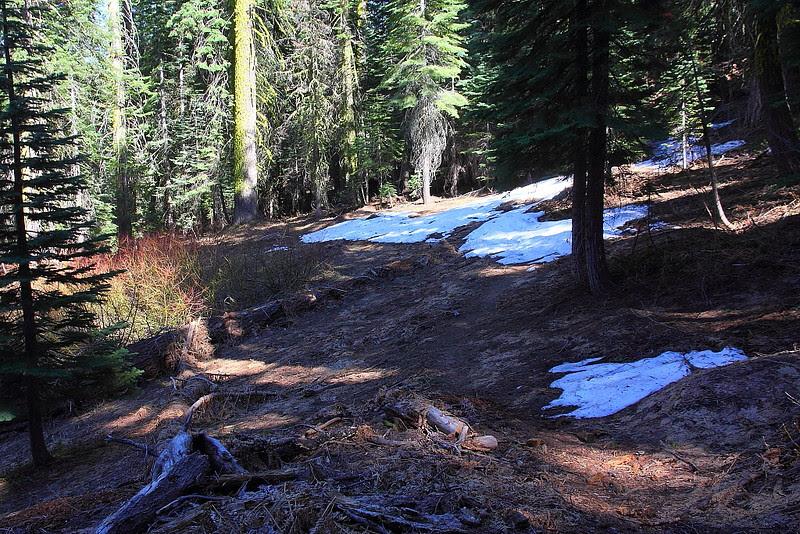 IMG_3018 Pohono Trail