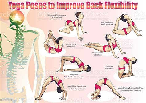 yoga poses  improve  flexibility stock vector art