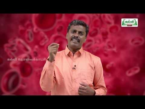 வகுப்பு 10 அறிவியல் அலகு 14 விலங்குகளின் சுற்றோட்டம் Kalvi TV