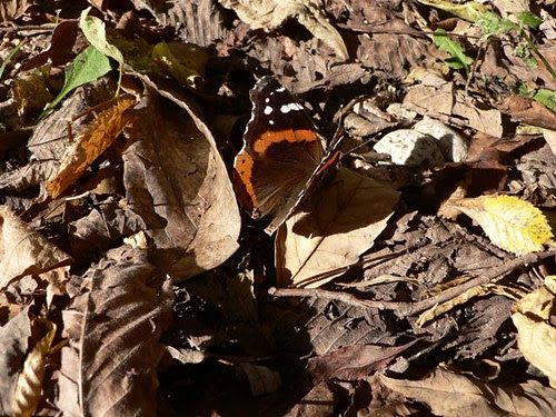Butterfly at Hawthorne Hollows