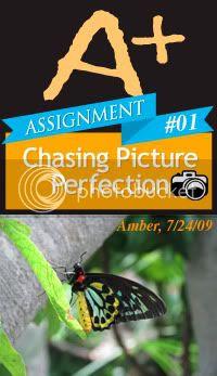 ChasingPicturePerfection
