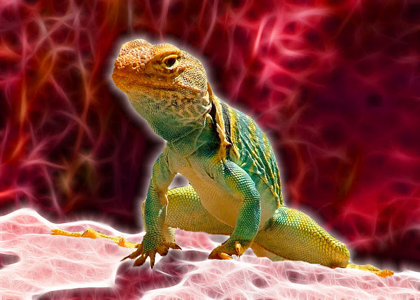 Fractalius Lizard