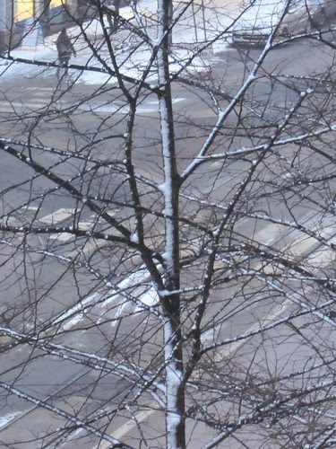 Trees in the city by Anna Amnell