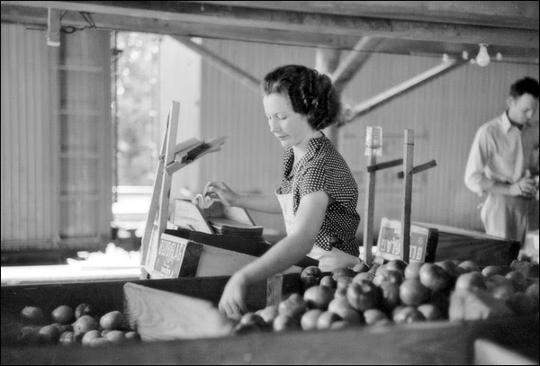 1936-mississippi-terry-tomato-packing.jpg
