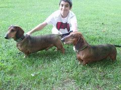 Huntin' Dogs by Teckelcar