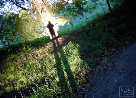 24.8 - walk :: gåtur med fine skygger