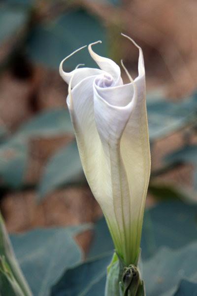 flower_closed