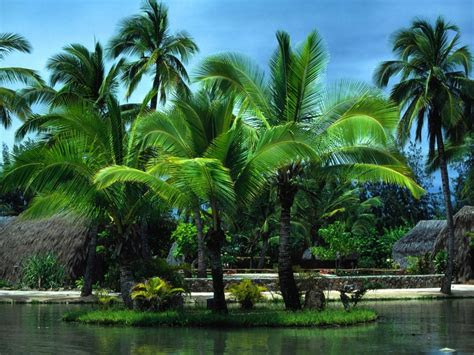 cool lake palm trees nature lakes hd desktop wallpaper