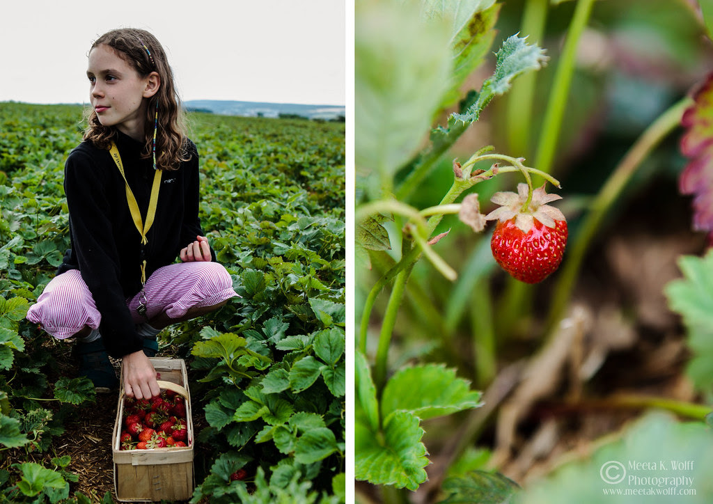 Diptych Strawberry Fields 1 by Meeta K. Wolff