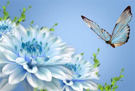 butterfly wallpapers desktop wallpapers