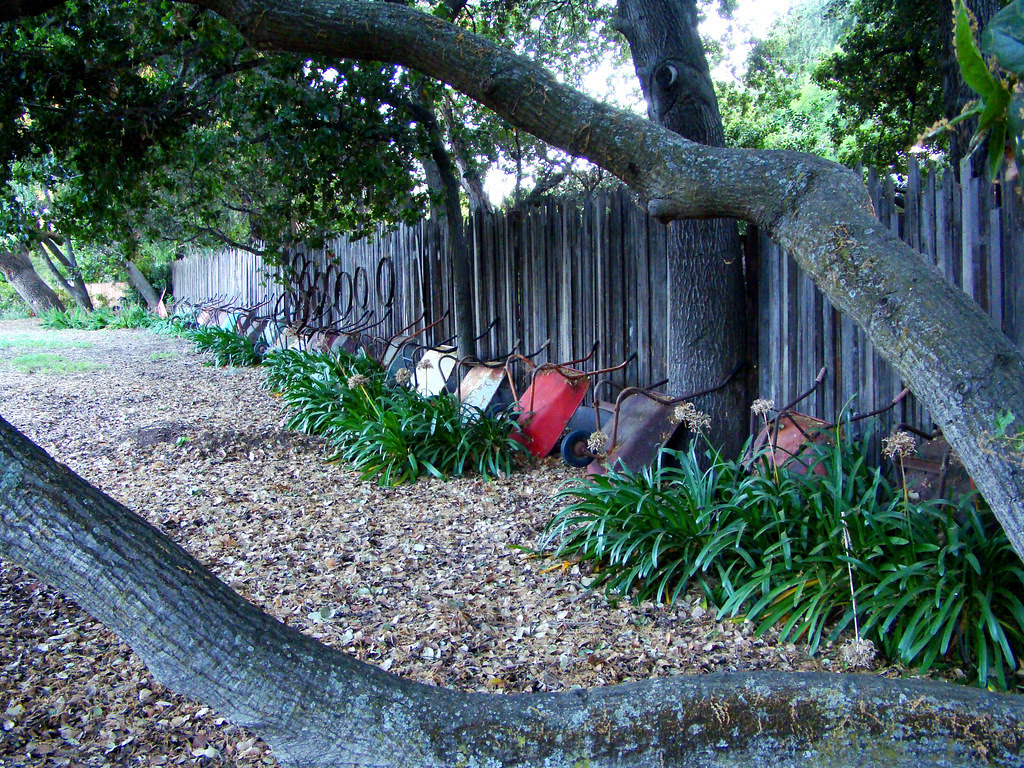 DSC05446 wheelbarrow collection