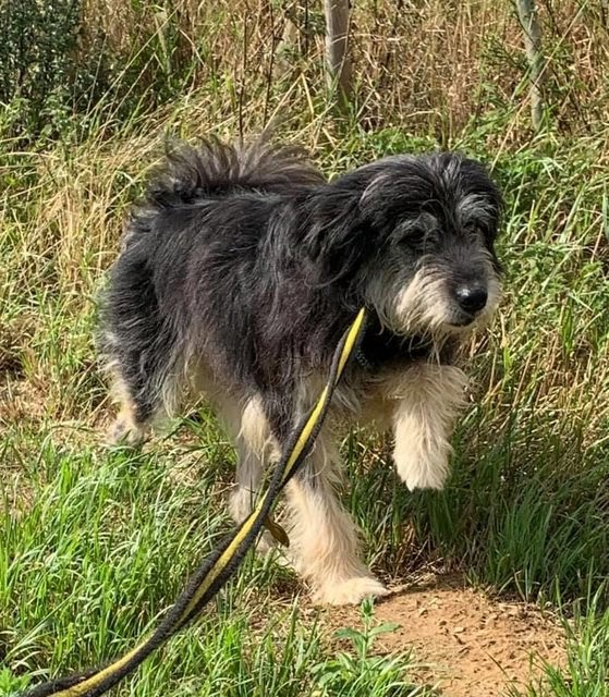 Riley – 5-6 year old male Cross-Breed