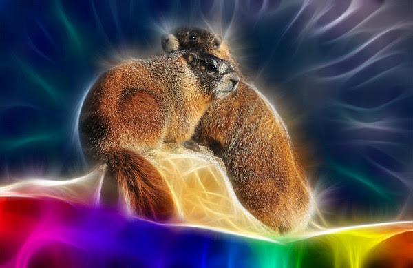 Fractal Marmots