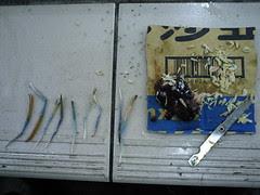 釣蝦用的雞肝和小蝦米