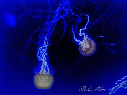 Newport Aq jellyfish 3-ip