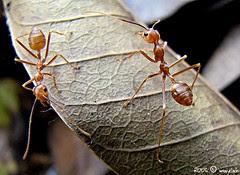 ants ...