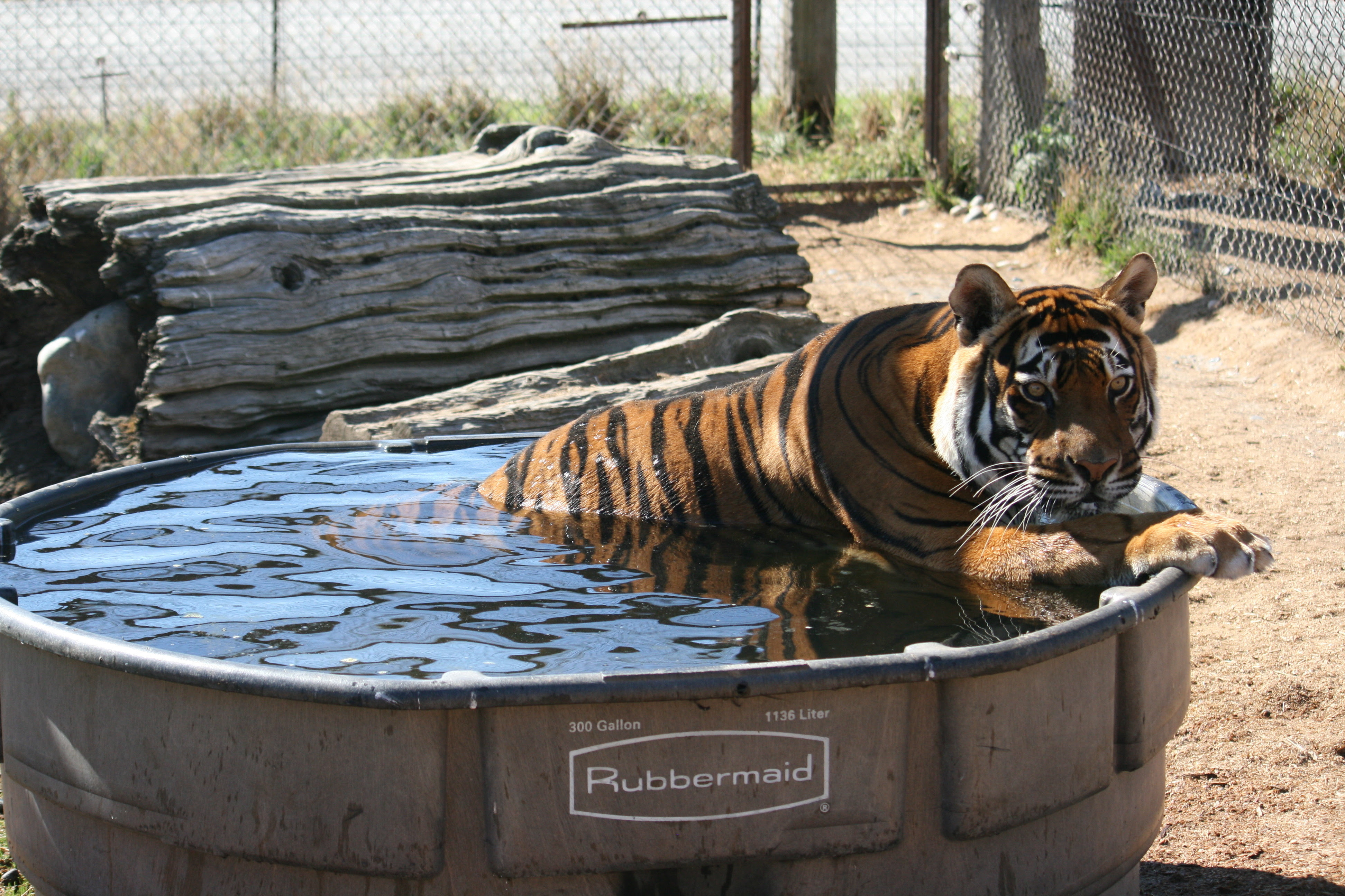 tigerpool