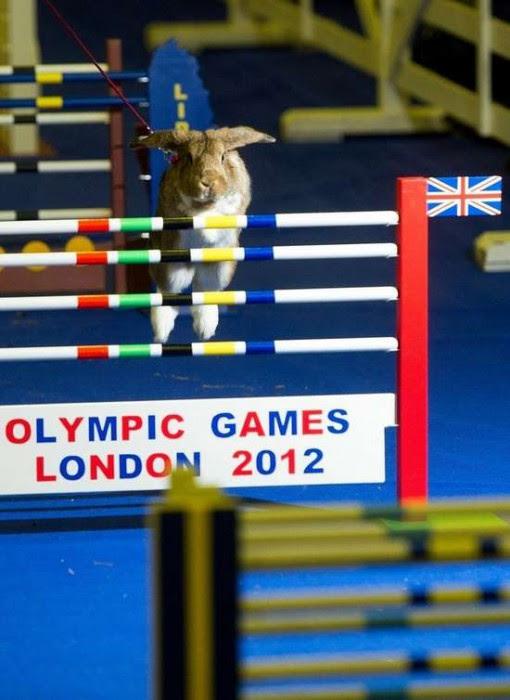 Ολυμπιακοί αγώνες για κουνέλια (1)