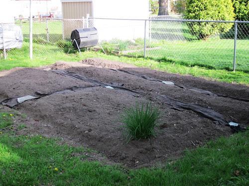 the garden 2010