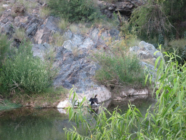photo Black Canyon Trail 081.jpg