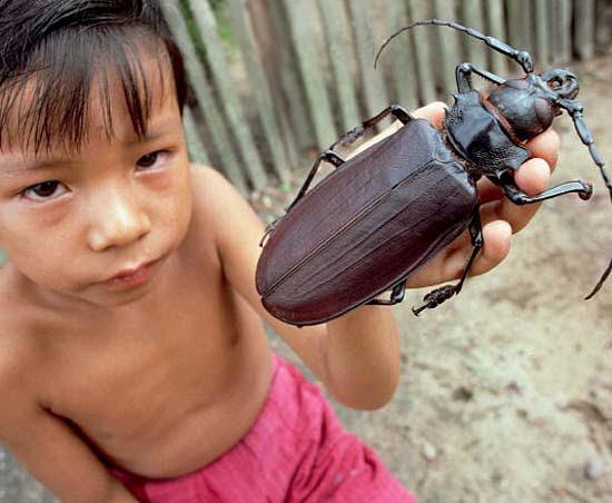 Τα 16 μεγαλύτερα έντομα στον κόσμο (1)