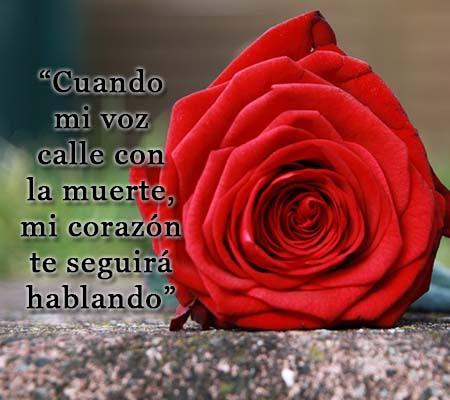 Frases Con Rosas De Amor Rosas De Amor