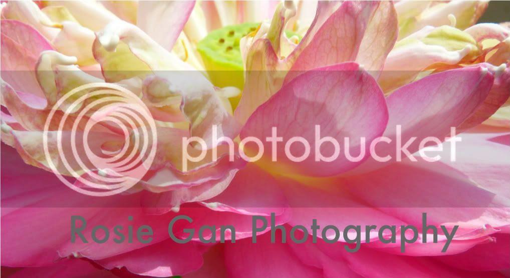 Rosie Gan Photography