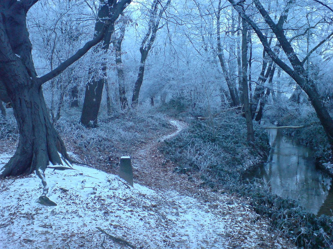http://upload.wikimedia.org/wikipedia/commons/thumb/9/92/Winter_Forest_Near_Erzhausen_II.jpg/1280px-Winter_Forest_Near_Erzhausen_II.jpg