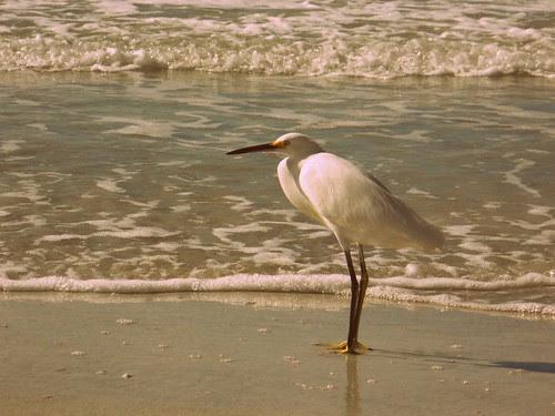 1960s Bird