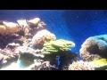 New York Aquarium - 6.16.12 - 002.mp4