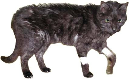 nierenversagen katze