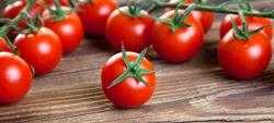Batterio pericoloso in pomodorini provenienti dal Marocco
