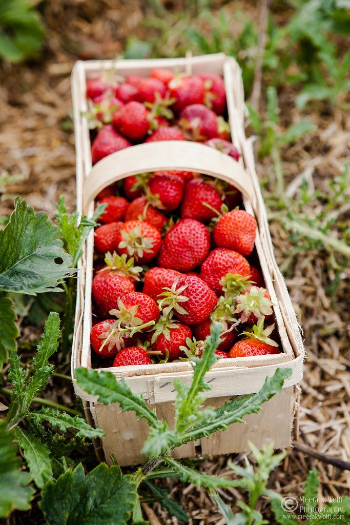 French Strawberry Creme Patiserie Tart (0060) by Meeta K. Wolff